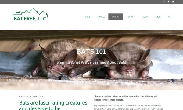 Wordpress site and logo design for bat proofing pest control company